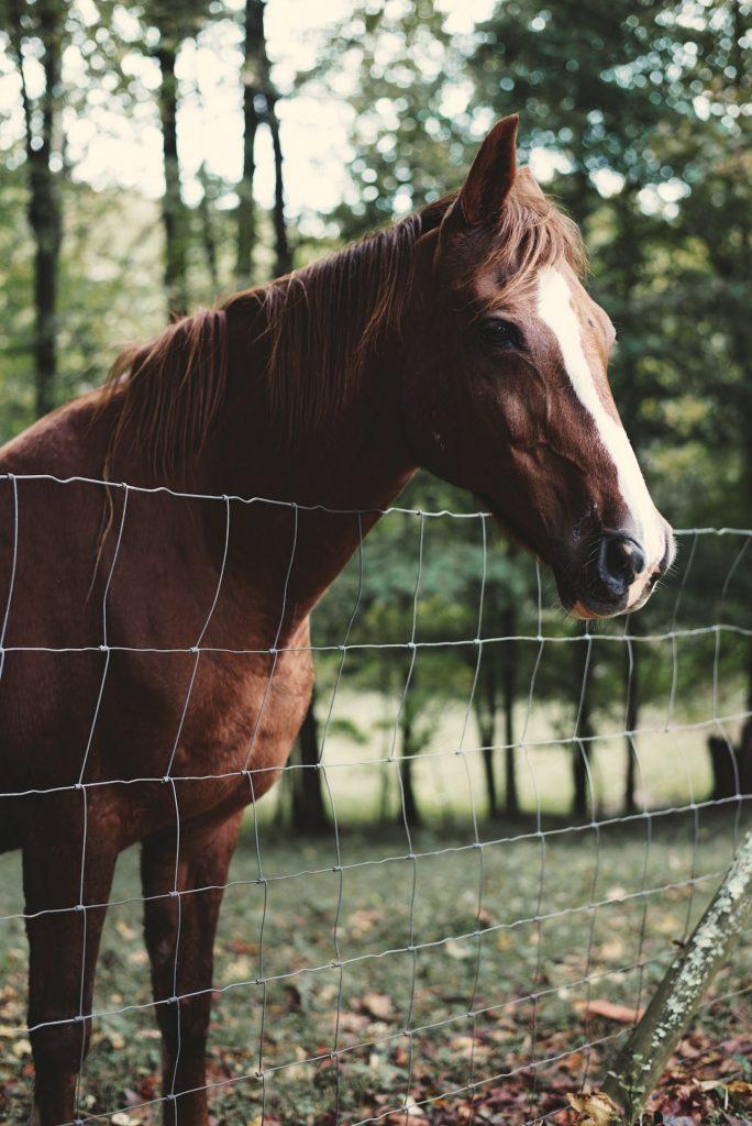Häst vid stängsel